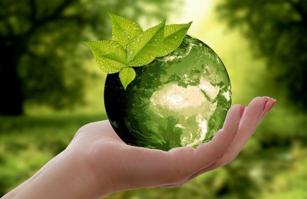 Создан экологический совет при губернаторе Петербурга
