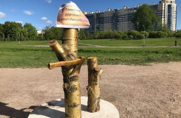 Памятник деревьям Петербурга появился вМуринском парке
