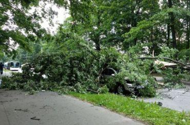 Штормовой ветер валит деревья идорожные знаки вПетербурге