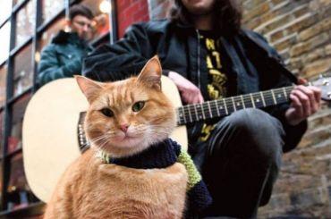 Всемирно известный уличный кот Боб умер вБритании