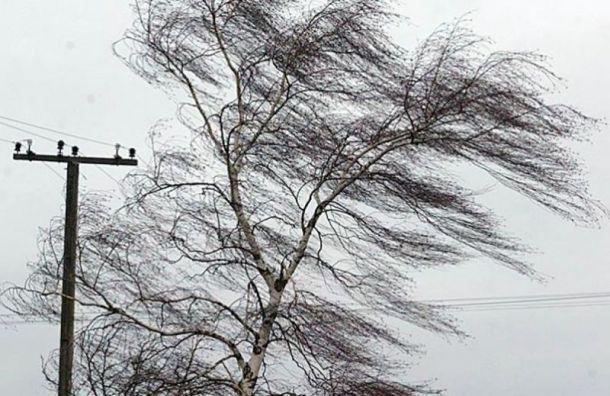Из-за грозы иветра вПетербурге объявили желтый уровень погодной опасности