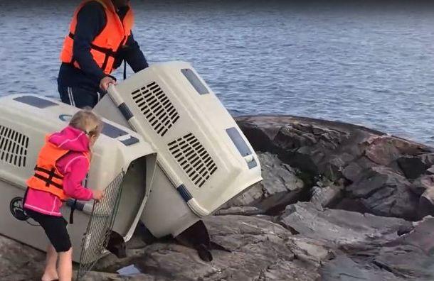 Видео: петербуржцы выпустили детенышей нерп вЛадожское озеро