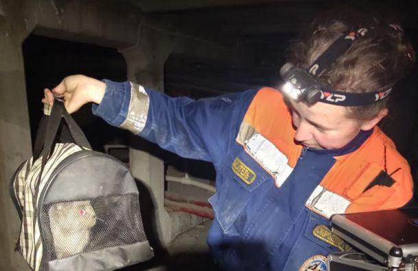Петербургские спасатели вытащили извентиляционной шахты измученную кошку