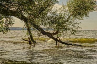 Более 120 деревьев пострадали отсильного ветра вПетербурге