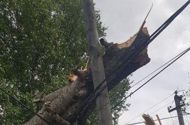 Жители Новосиверской больше суток сидят без света из-за упавшего дерева
