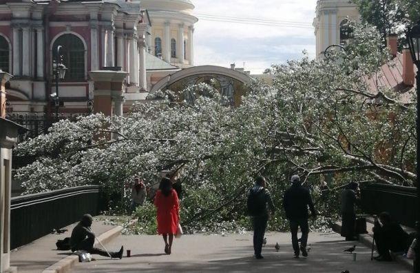 Массивное дерево заблокировало вход вАлександро-Невскую лавру