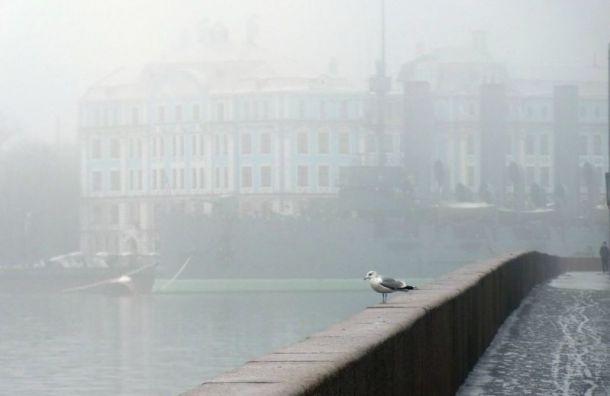 НаЛенобласть опустится туман, авПетербурге похоладает