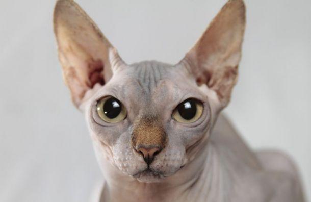 Масочный режим может быть опасен для котов