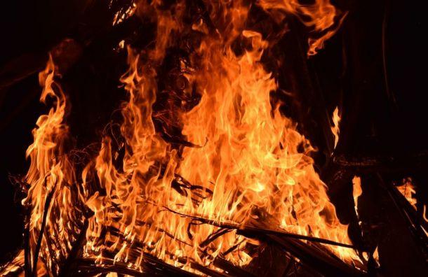 Полиция и МЧС будут искать разжигателей костров в Курортном районе