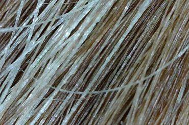 Норвежского ученого судили запопытку вывезти изРоссии образцы волос