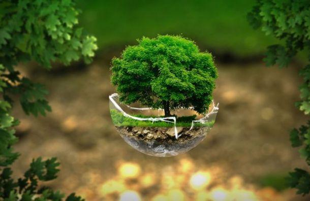 Петербург остался навосьмом месте вНациональном экологическом рейтинге