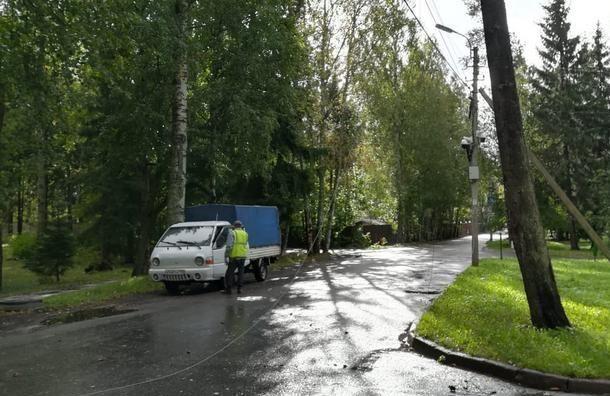 Штормовой ветер повалил более 560 деревьев вПетербурге