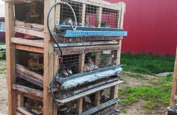 Порядка семи тысячи цыплят погибли при пожаре вЛенобласти