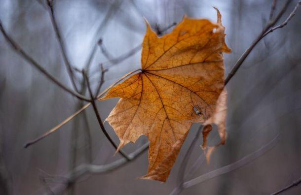 ВПетербурге конец недели будет по-осеннему холодным