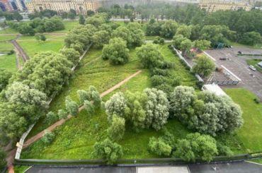 Петербуржцы заявили овырубке территории уПулковского парка