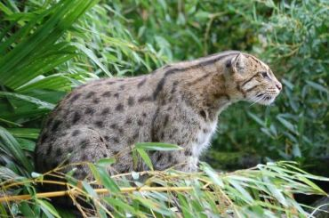 Виверровые коты впервые прошли контроль ваэропорту Пулково