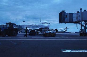 «Аэрофлот» вводит новые правила для перевозки животных