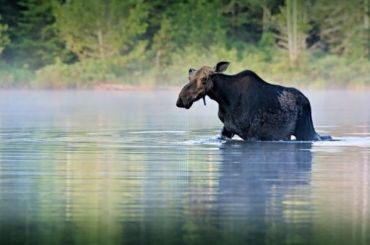 Петербуржец заплатит 400 тысяч рублей заубийство лося