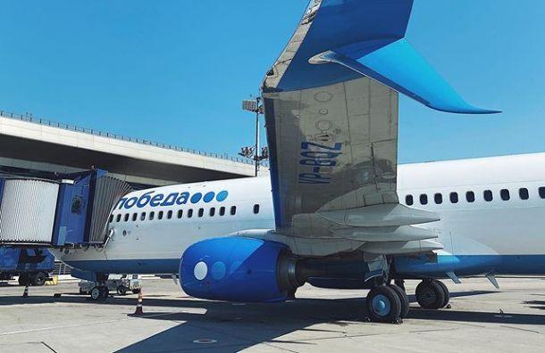 Собака помешала самолету изМосквы приземлиться ваэропорту Пулково