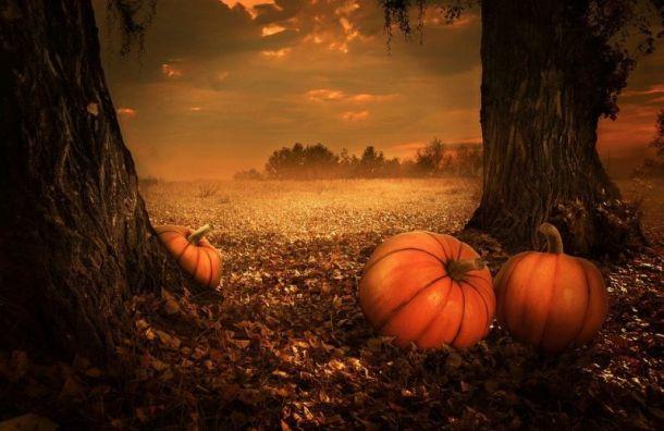Петербуржцам рассказали, какая погода ожидается наХэллоуин