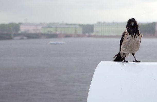 Петербуржцев предупредили опохолодании вчетверг