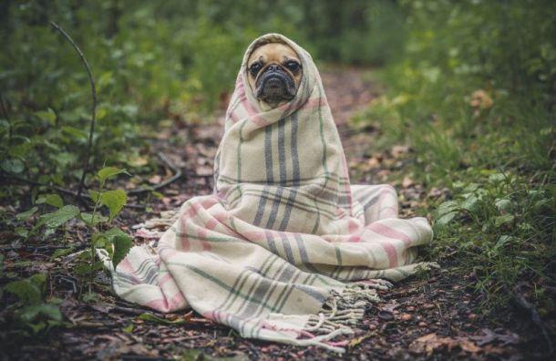 Мошенники пытались обменять собаку наквартиру пожилой петербурженки