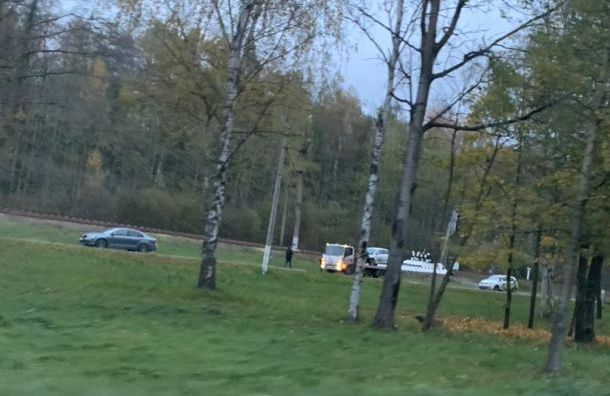 Автолюбитель сбил кабана перед посёлком Лисий Нос