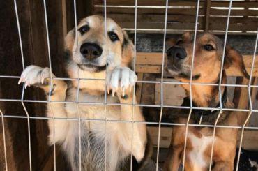 Изквартиры вКолпинском районе вприют переселят 26 собак
