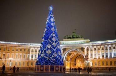 Петербуржцы выбрали живую новогоднюю ель для Дворцовой площади