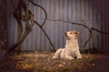 ВПетербурге привили отбешенства ичипировали более 1300 бездомных собак