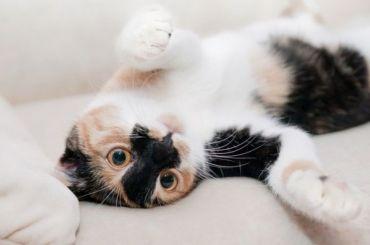 Жителя Петербурга обязали выплатить 100 тысяч засбитую насмерть кошку
