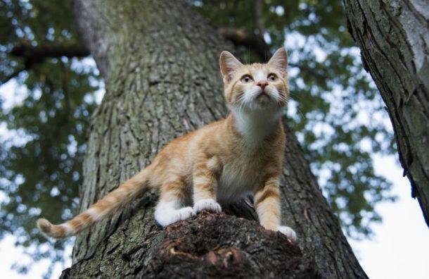 Спасатели объяснили Артемию Лебедеву, зачем доставать кошек сдеревьев