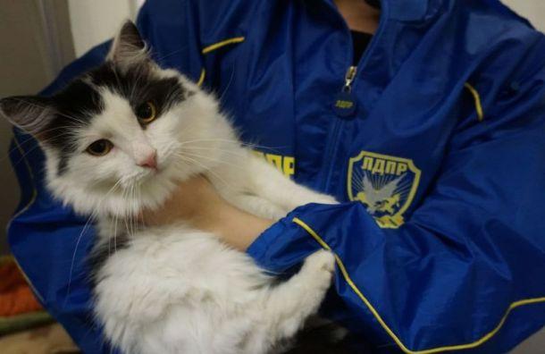 Отделение ЛДПР вПетербурге приютило кота покличке Карасик