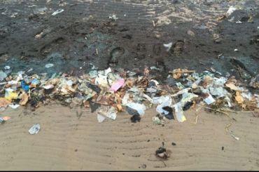 Берег Финского залива усыпан мусором изелеными водорослями