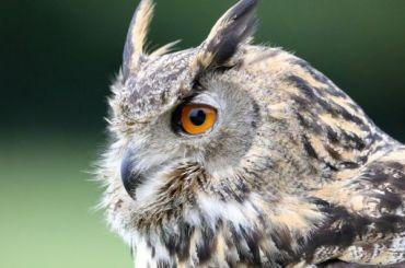 Сотрудники ЦПКиО попросили посетителей неподкармливать сов