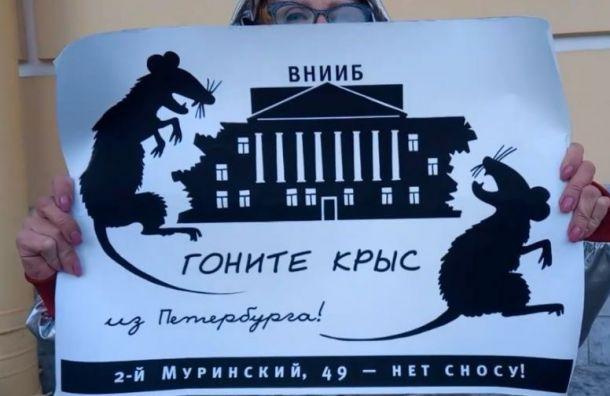 Защитники ВНИИБа принесли кСтройнадзору плакаты скрысами