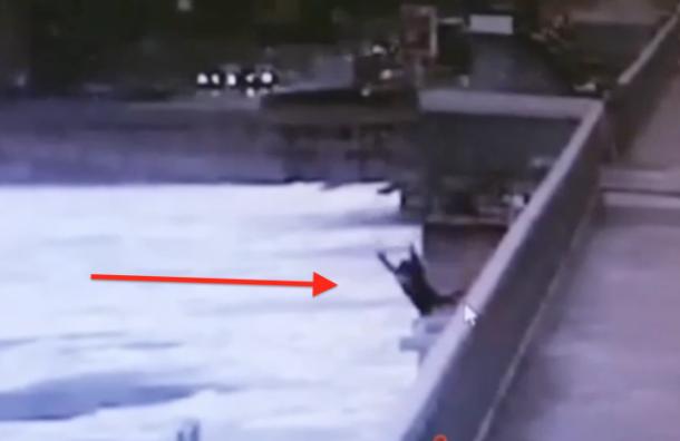 Девушка упала с моста Александра Невского