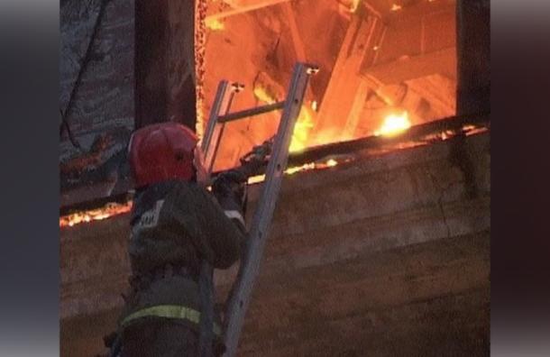 Женщина, кошка идве собаки погибли впожаре вКрасносельском районе