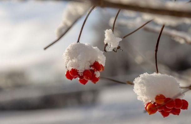Петербуржцев ждет теплый день смокрым снегом