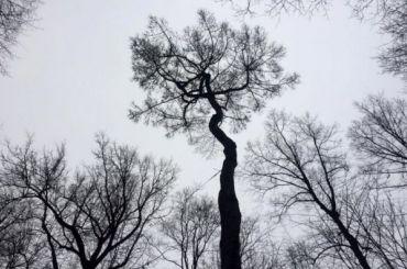 Как деревья могут стать памятниками