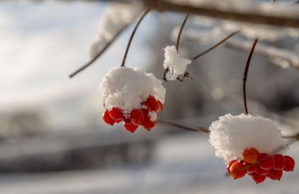 Под Новый год вПетербурге будет аномально тепло