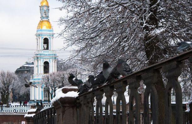 Петербуржцев ожидает «зимняя идиллия»— небольшой снег илегкий мороз