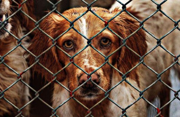 Два государственных приюта для бездомных животных хотят создать вПетербурге