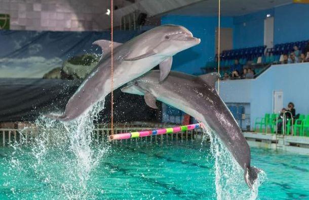 «Оставьте дельфинов вморе»