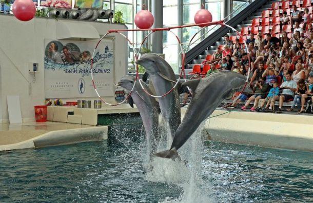Петербуржцы выступили против строительства дельфинария на«Академической»