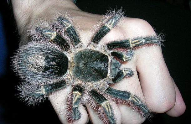 Биолога задержали вБразилии запопытку вывезти вПетербург пауков илягушек