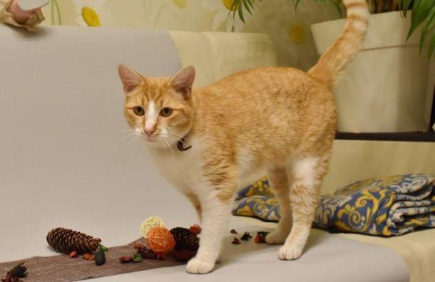 Первый случай заражения домашнего кота COVID-19 выявили вПетербурге