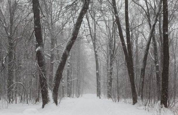 Понедельник вПетербурге будет холодным