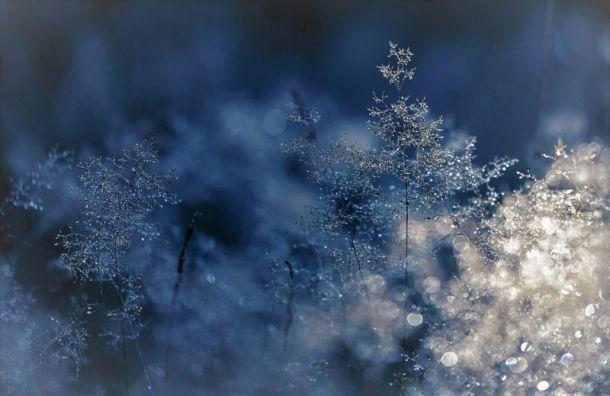 Петербуржцев ожидает похолодание до-14 градусов