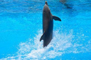 Смольный озвучил причины, мешающие строительству дельфинария
